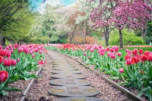 3 conseils pour bien entretenir votre jardin