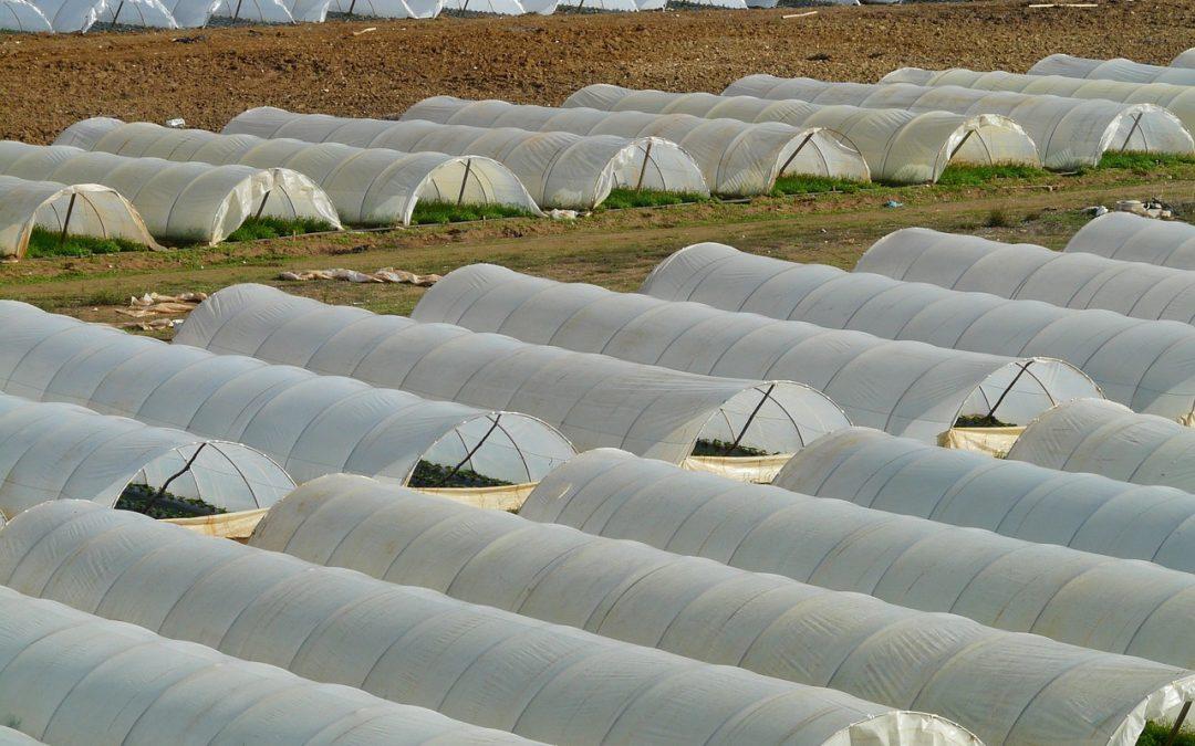 Tunnel agricole : Définition et conseils pour jardiner avec de hauts tunnels