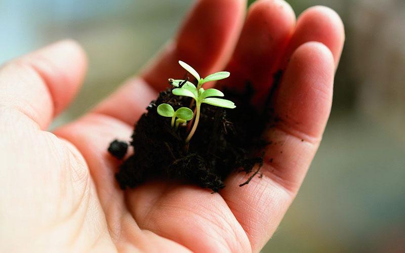 Astuces pour connaître la nature du sol de votre jardin
