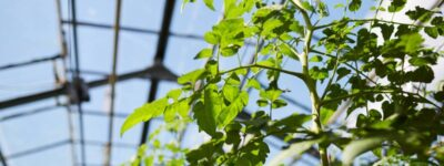 Pourquoi cultiver sous serres est une bonne idée ?