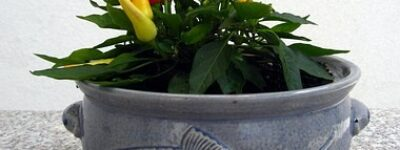 Mettez-vous au vert en faisant pousser des légumes sur votre balcon