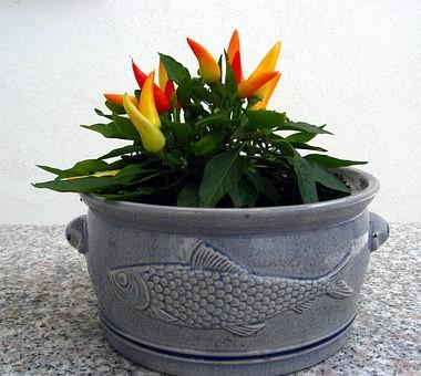 piment dans un pot de vase