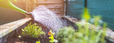 Entretien du jardin : les bases