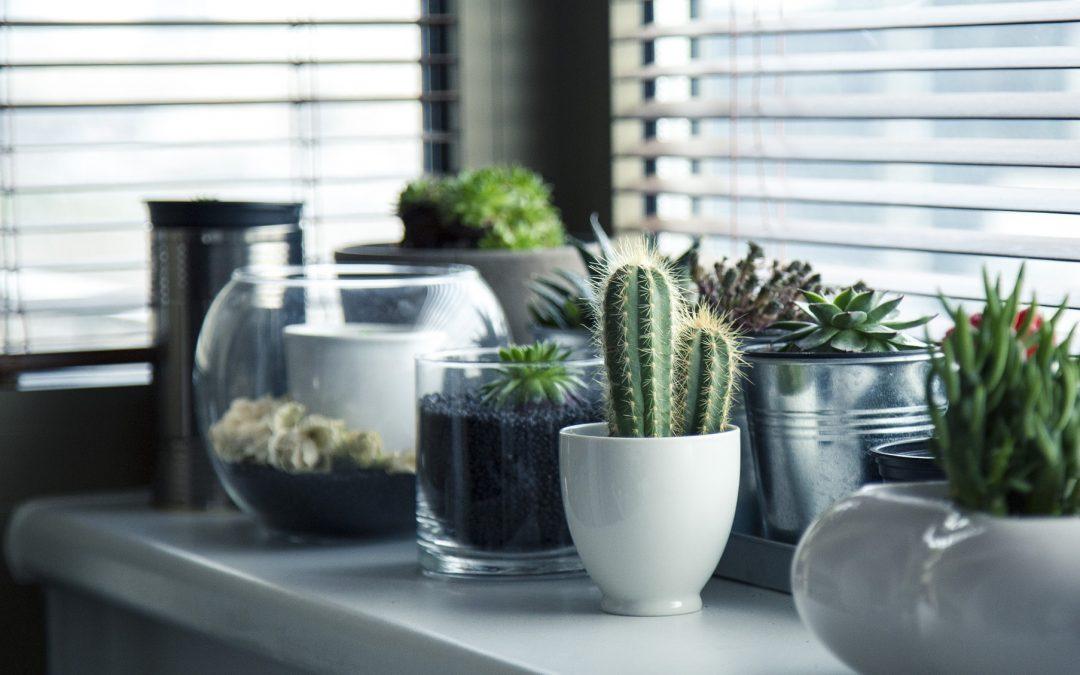 Succulents, cactus, plantes tropicales et idées sur la façon de les conserver.