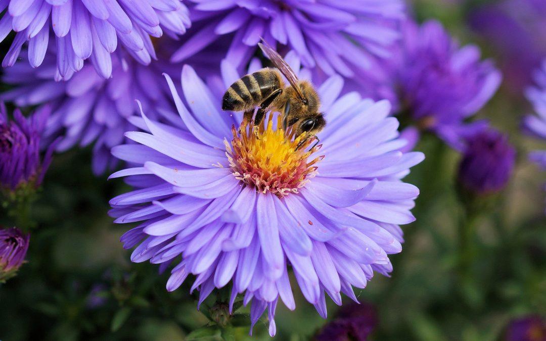 4 idées de jardins adaptés aux abeilles