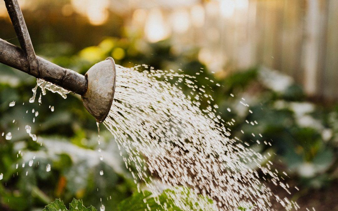 5 mythes largement répandus sur le jardinage que vous devriez commencer à ignorer