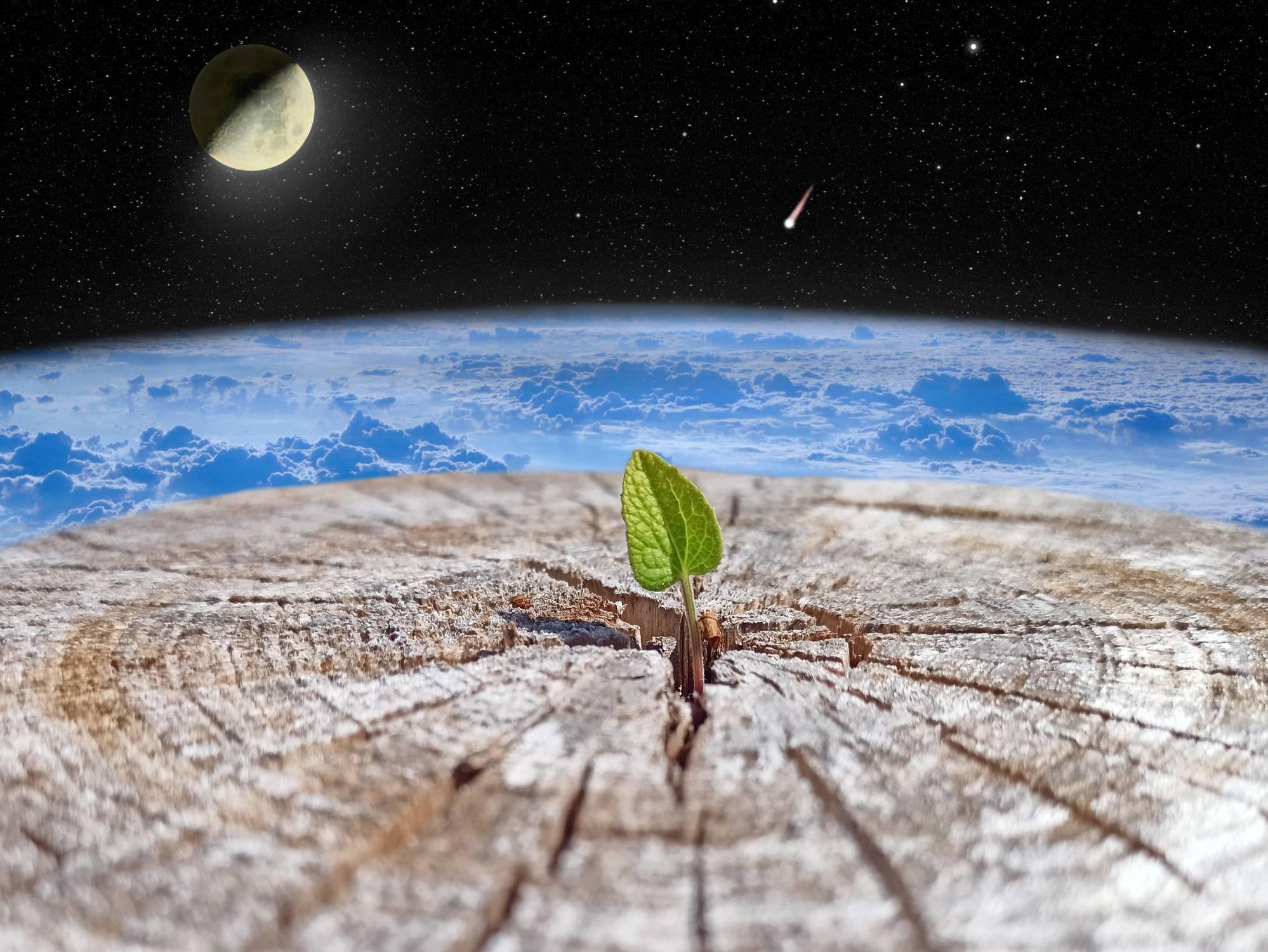 plante qui pousse sous l'action de la lune