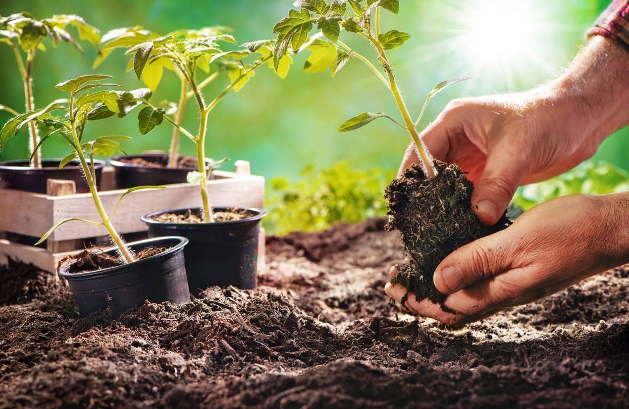 création jardin écologique