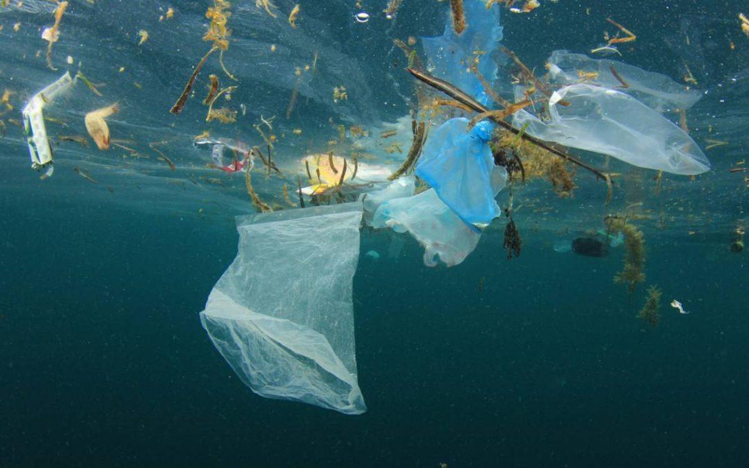 Ecologie : le plastique là où il ne devait pas être.